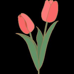 チューリップの花のイラスト