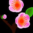 ひな祭りケーキの梅