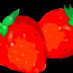 苺のイラスト